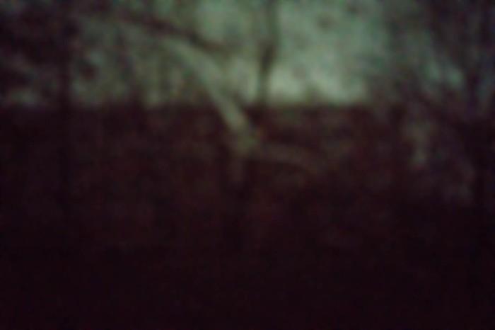 Nepenthe 7